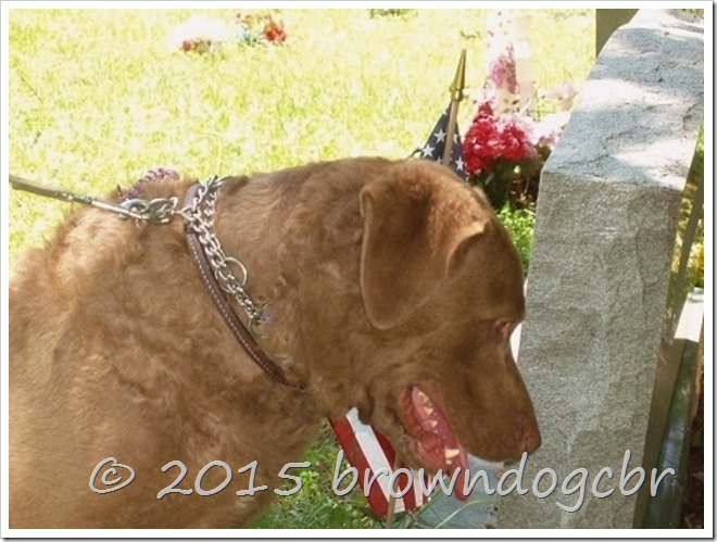 Hawk with head bowed in cemetery