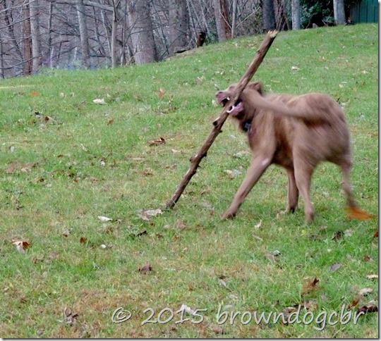 Dang Stick!