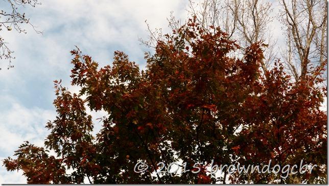 Clouds accent autumn color