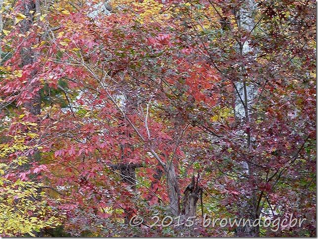 Last of autumn color