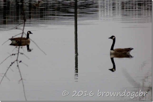 January Geese