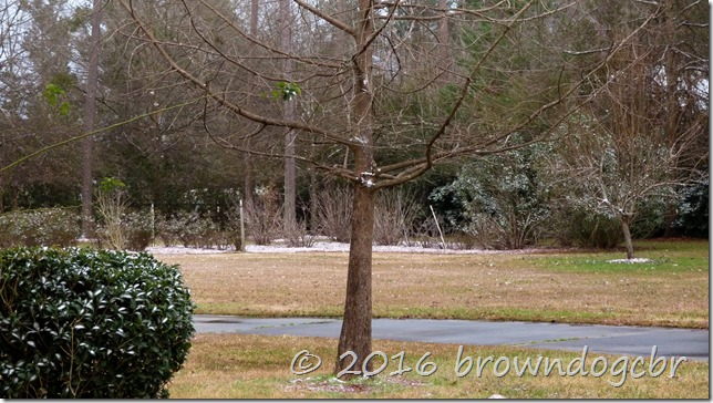 Snow in the low country