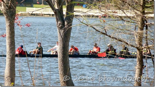 Scullers enjoying the warm southern weather.