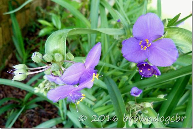 Spring into summer flower