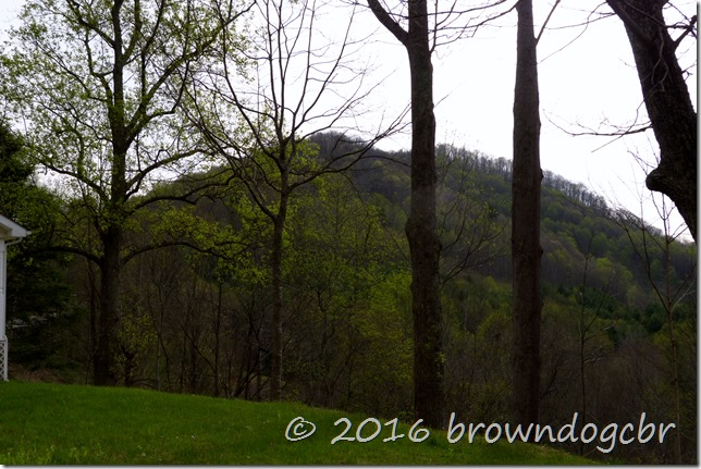 Green slowly creeps up the mountains