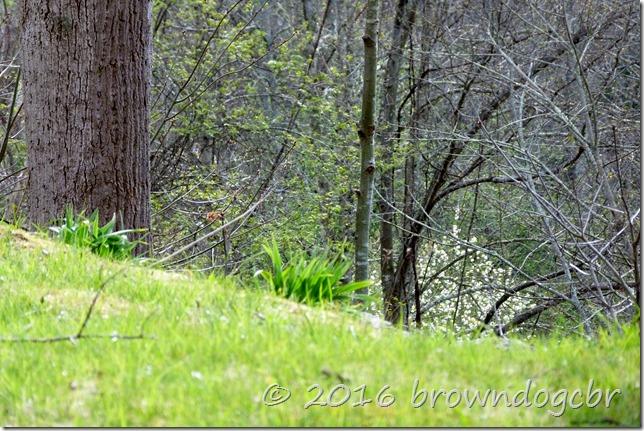 Daylilies were makin' headway...
