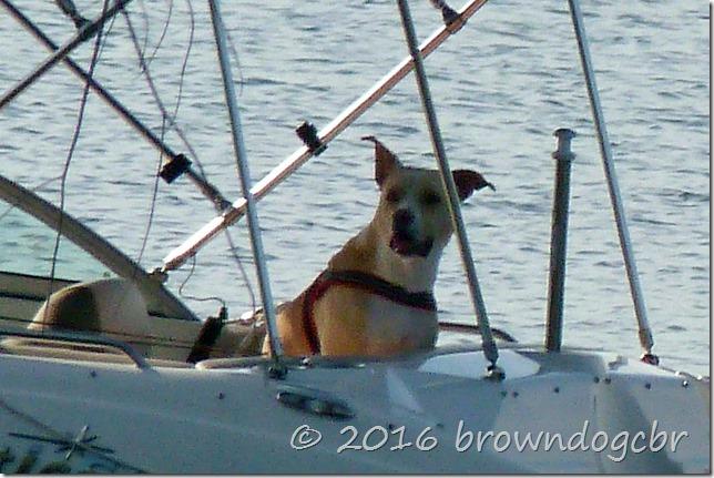Sailin' along, singin' a song...