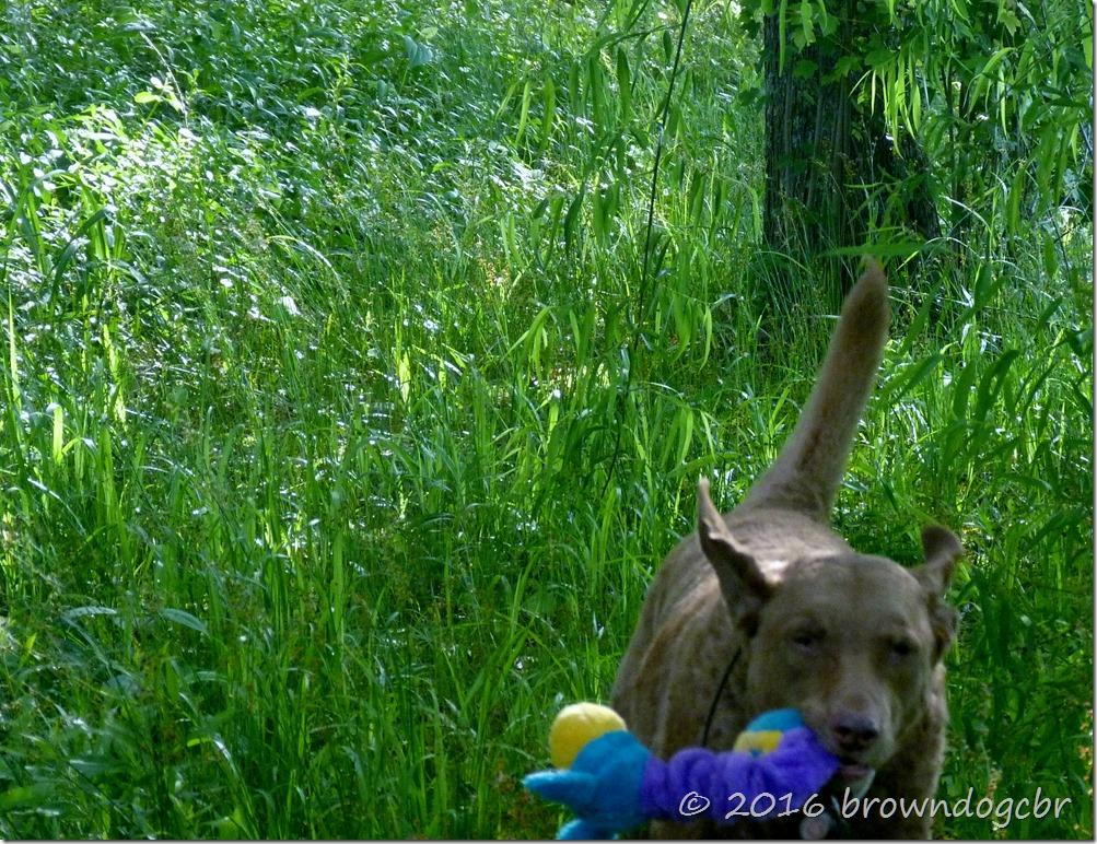 Hi Y'all!  It's critter saturday so I'm takin' Squiggles for a fun run!