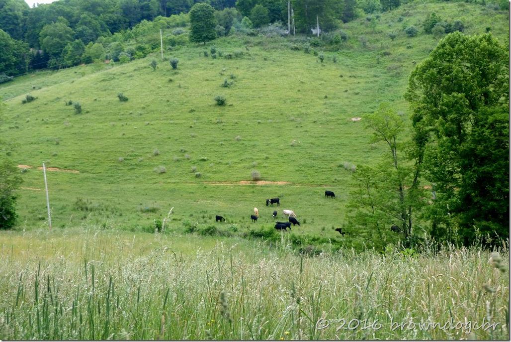 Peaceful pastoral scene